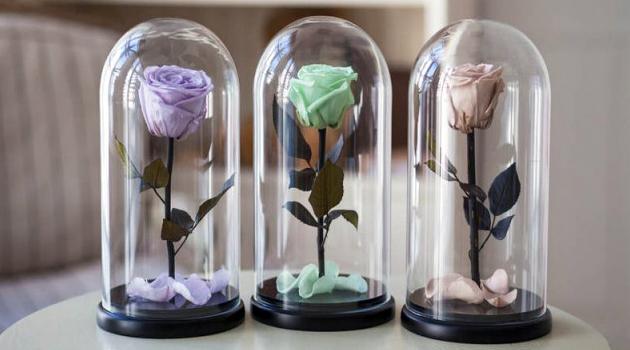 Розы под колбой