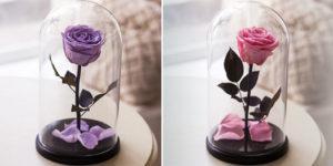 Розовая и сиреневая